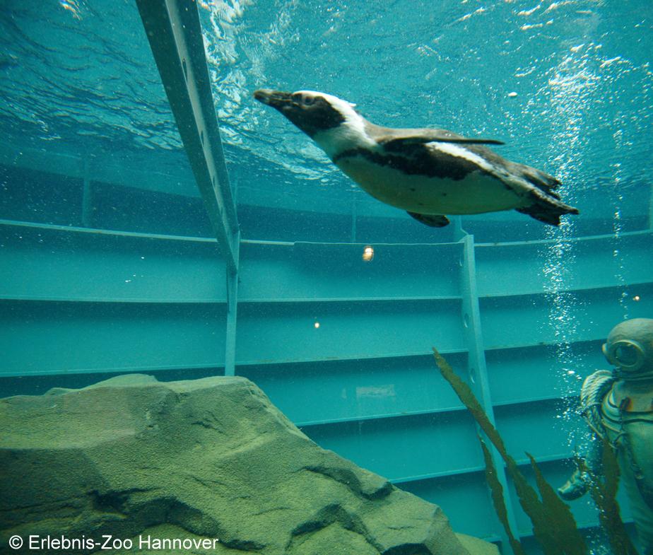 Unterwasser-Einblicke